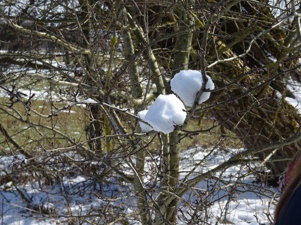 winter-dsc00461