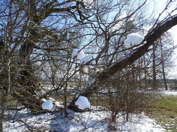 winter-dsc00464
