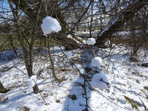 winter-dsc00465